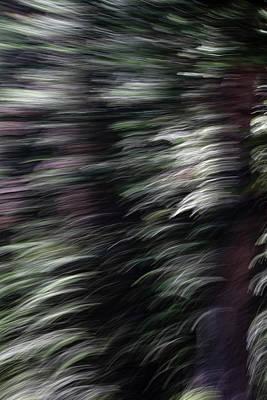 Photograph - Ponderosa Twist by Deborah Hughes