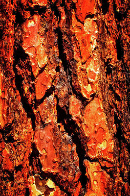 Photograph - Ponderosa Pine Macro Trunk Abstract No. 01 by Roger Passman