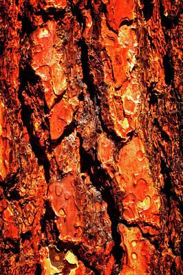 Photograph - Ponderosa Pine Macro Trunk Abstract No. 01 by Roger Passman