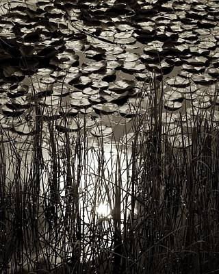 Photograph - Pond's Edge by Colleen Williams