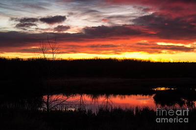 Photograph - Ponds In The Morning by Steven Parker