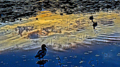 Pondscape Art Print by Jeffrey Friedkin