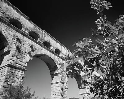 Pont Du Gard And Fig Tree Art Print by Richard Goodrich