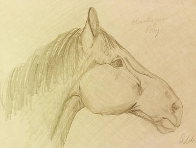 Adele Drawing - Pony 1 by Adele Fulcher