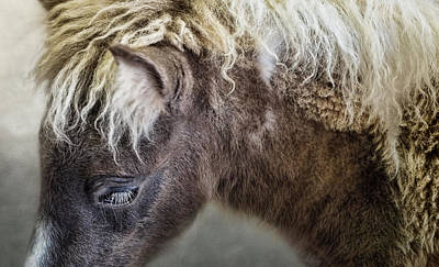 Photograph - Pony by Ann Powell
