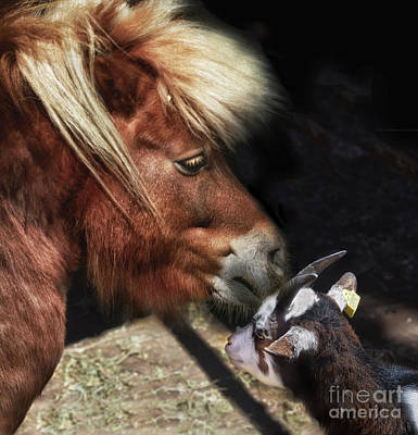 Photograph - Pony Bonding With Little Goat by Stephan Grixti