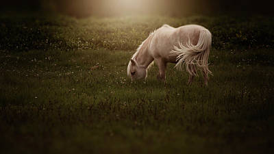 Photograph - Pony by Erica Kinsella