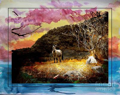 Photograph - Pony In Volcan, Panama by Al Bourassa