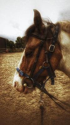 Photograph - Pony by Isabella F Abbie Shores FRSA