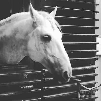 Photograph - Ponytail Horse by Donato Iannuzzi