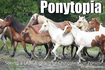 Photograph - Ponytopia Saying by Captain Debbie Ritter