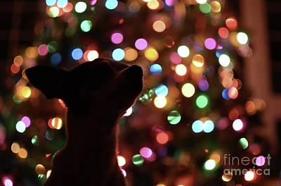 Photograph - Pooch Christmas by The Art of Alice Terrill