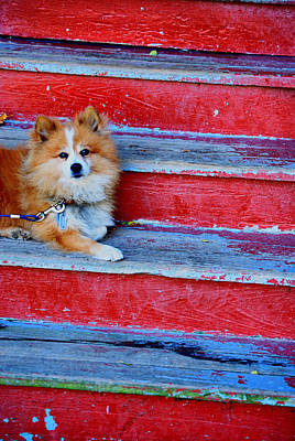 Photograph - Pooch by Emily Stauring