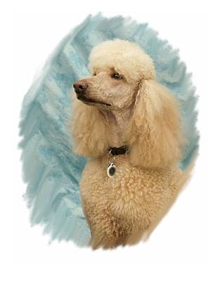 Poodle Digital Art - Poodle 05 by Larry Matthews