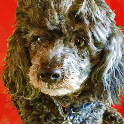 Painting - Poodle Black On Red by Jackie Jacobson
