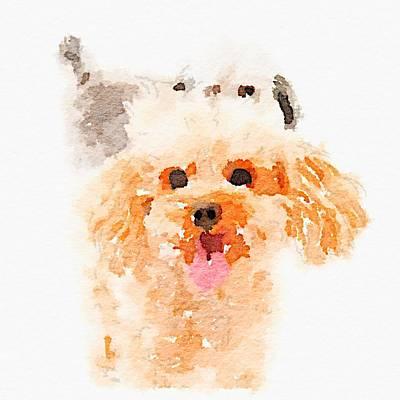 Photograph - Poodle Friends Waterlogue by Susan Morrow