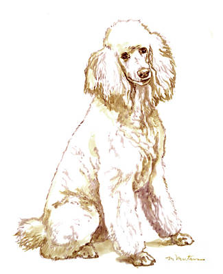 Drawing - Poodle by Meridith Martens