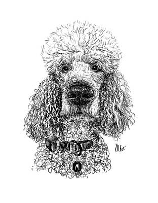 Photograph - Poodle @standerdpoodle by ZileArt