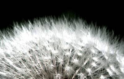 Photograph - Poof Dandelion Dreams by Angela Davies