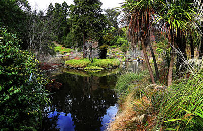 Photograph - Pool In The Botanic Gardens by Nareeta Martin