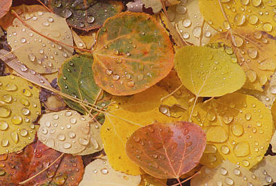 Photograph - Pool With Aspen Leaves by John Farley