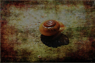Photograph - Poolside Snail by Lesa Fine