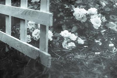 Photograph - Romance by Mary Hahn Ward