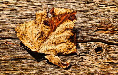 Photograph - Poplar Leaf On Barn Wood - 1 by Greg Jackson