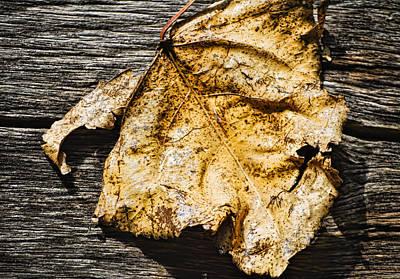 Photograph - Poplar Leaf On Barn Wood - 2 by Greg Jackson