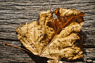 Photograph - Poplar Leaf On Barn Wood - 3 by Greg Jackson