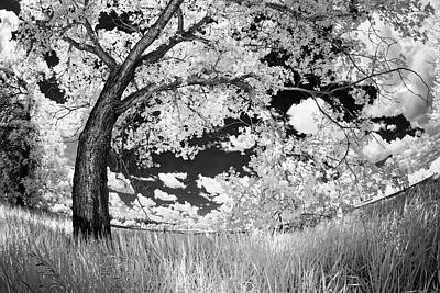 Art Print featuring the photograph Poplar On The Edge Of A Field by Dan Jurak