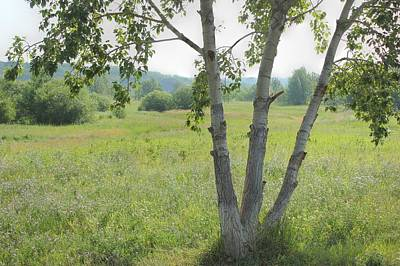 Nature Photograph - Poplar Tree In Meadow by Jim Sauchyn