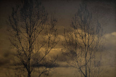 Photograph - Poplars And Clouds by Theresa Pausch