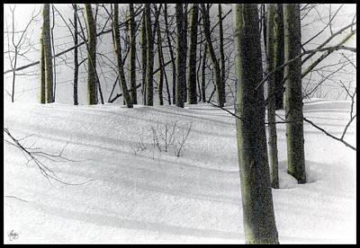 Photograph - Poplars by Wayne King