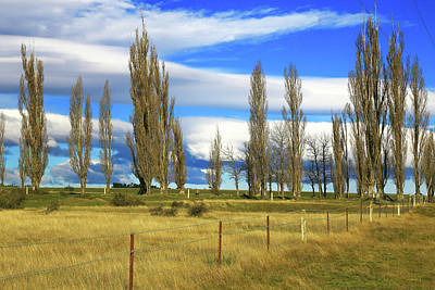 Photograph - Poplars,fence And Grasses by Nareeta Martin