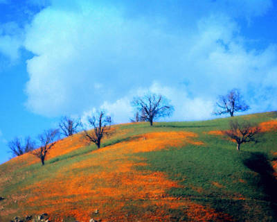 Photograph - Poppied Hillside by Timothy Bulone