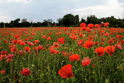 Photograph - Poppies 2 by Leah Palmer