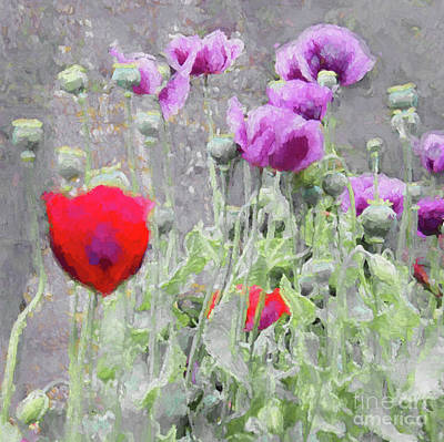 Mixed Media - Poppies, 2018 by Helen White