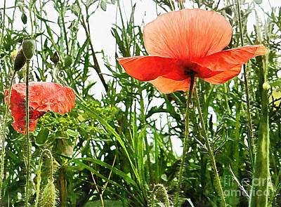 Photograph - Poppies After The Rain by Dorothy Berry-Lound