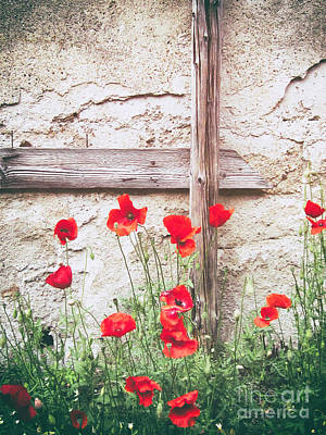 Photograph - Poppies Against Wall by Silvia Ganora