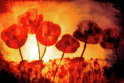 Photograph - Poppies Aglow On Fire by Debra and Dave Vanderlaan