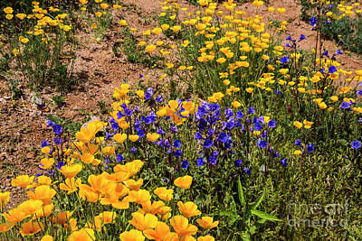 Photograph - Poppies And Blue Bells by Kathy McClure