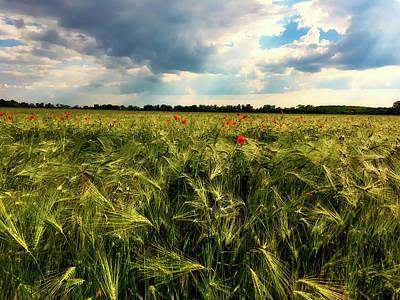Photograph - Poppies And Grain by Loredana Man