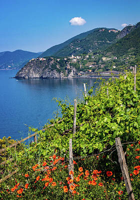 Photograph - Poppies And Grape Vines In Cinque Terre by Carolyn Derstine