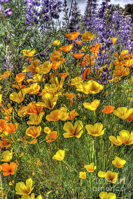 Art Print featuring the photograph Poppies And Lupines by Jim and Emily Bush