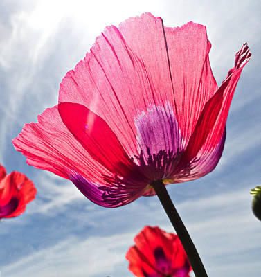Photograph - Poppies And Sky 2 by Robert Meyers-Lussier