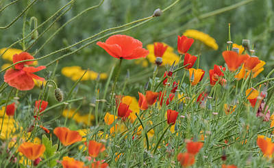 Photograph - Poppies by Angie Vogel