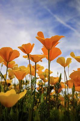 Photograph - Poppies Are A Poppin' by Saija Lehtonen