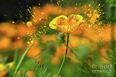 Photograph - Poppies Are Popping by Susan Warren