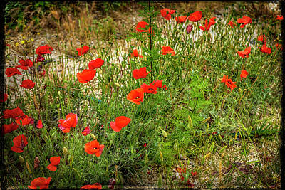 Photograph - Poppies Arles France _dsc5709_16 by Greg Kluempers
